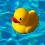 There are No Ducks