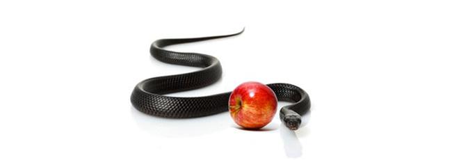 SnakeandApple2